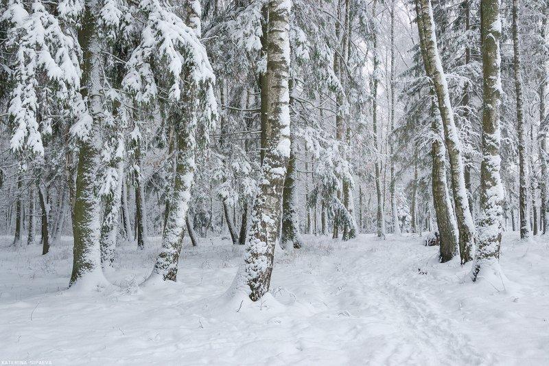 зима, пейзаж, лес, природа Намело немного снегаphoto preview