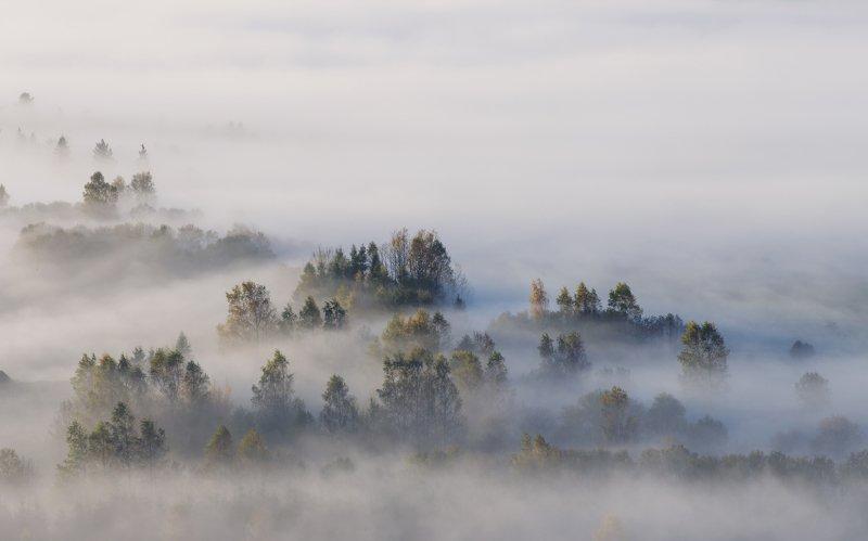 fog, foggy, morning, Pieniny, trees, forest, autumn, Poland Pieniny Mountainphoto preview