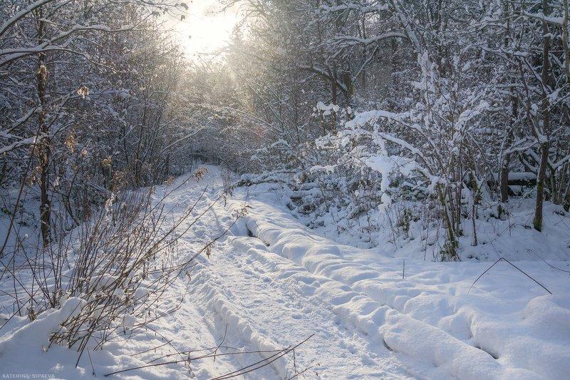 природа, зима, лес, пейзаж Заснеженная просекаphoto preview