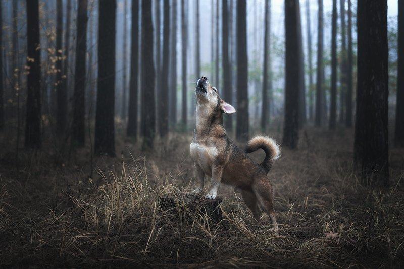 собака Волчонокphoto preview