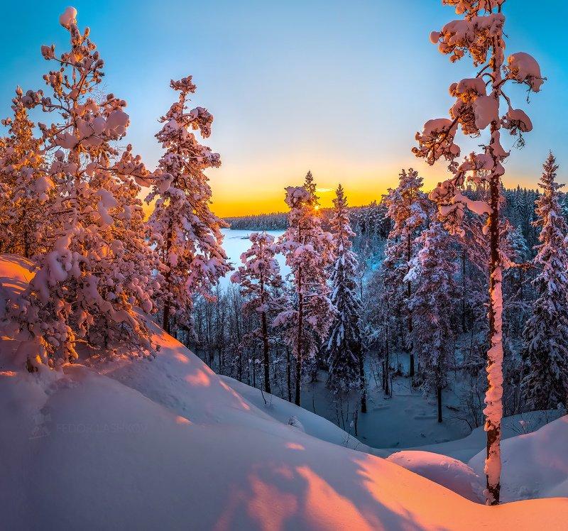 ленинградская область, закат, снег, зима, лес, сосна, дерево, снежное, в снегу, Уютная зимаphoto preview