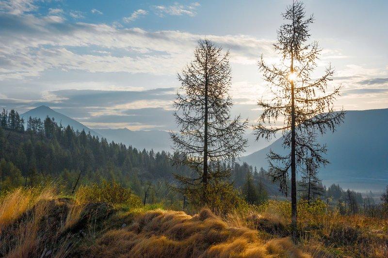горы, саяны, утро, солнце, деревья, трава Утро в Саянахphoto preview
