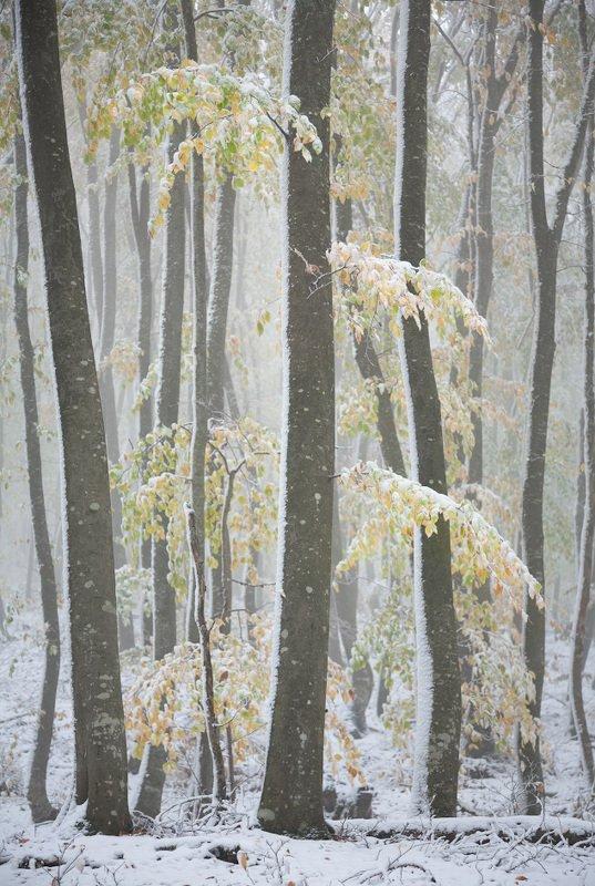 зимний цветphoto preview