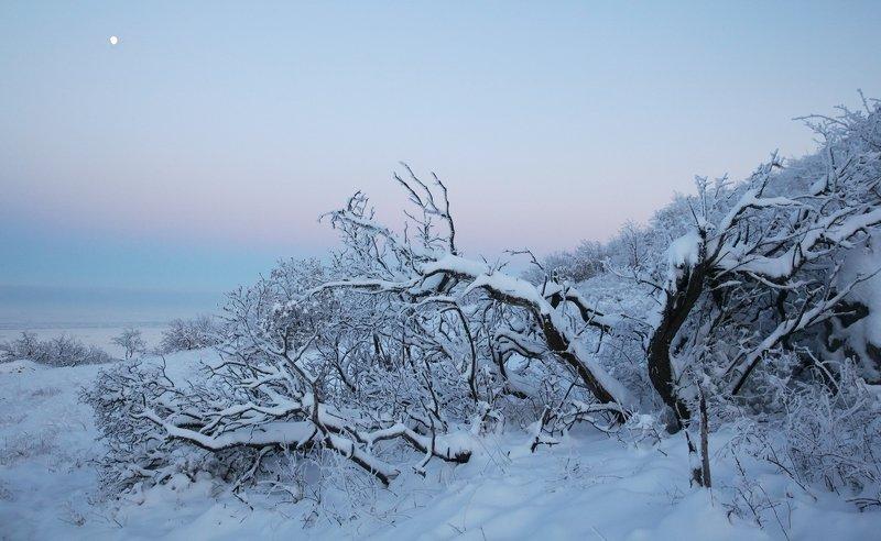 снег,зима,горы,вершины,пейзаж,небо,деревья,дагестан,природа Зимний вечер..photo preview