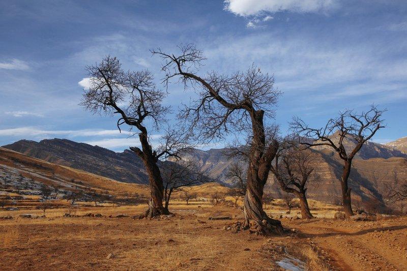 горы,вершины,пейзаж,небо,деревья,дагестан,природа Танцующие деревья..photo preview