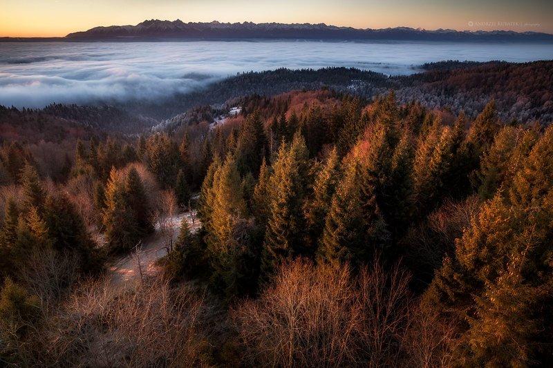 #landscape #fog #sunrise #Poland #gorce Sea of fogphoto preview