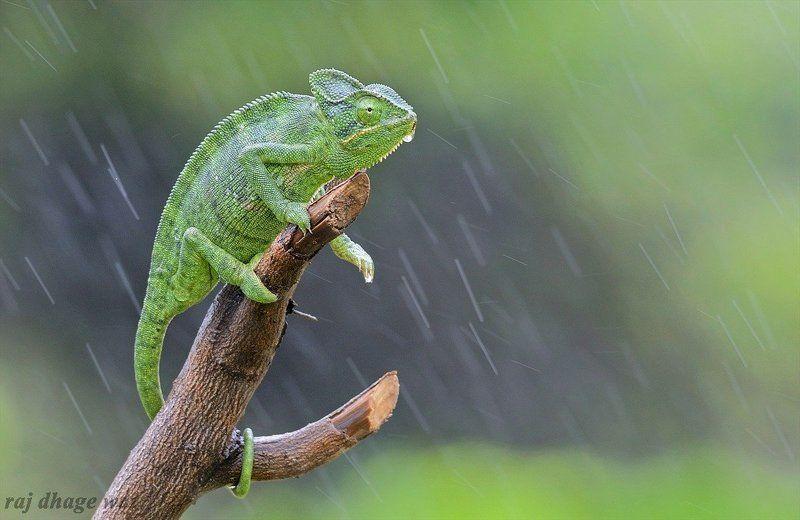chameleonphoto preview