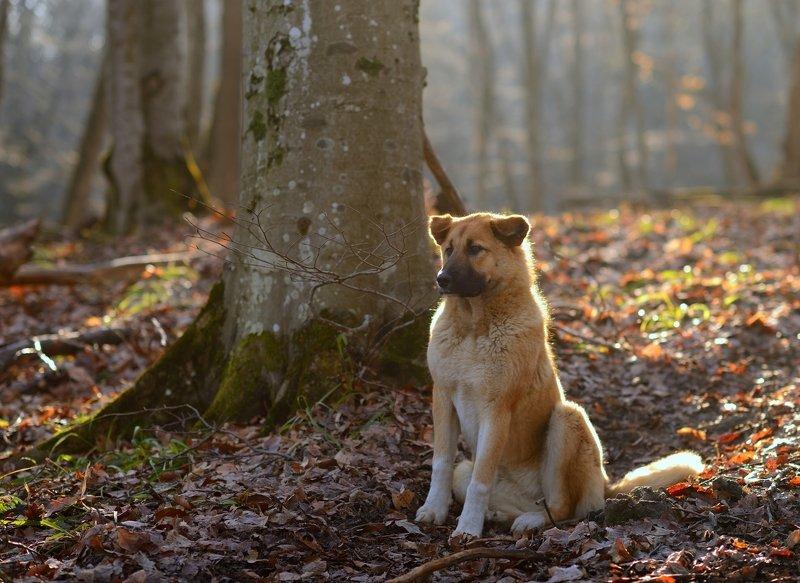 собака лес утро Нашел собакуphoto preview