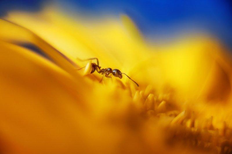 муравей  На солнечной полянкеphoto preview