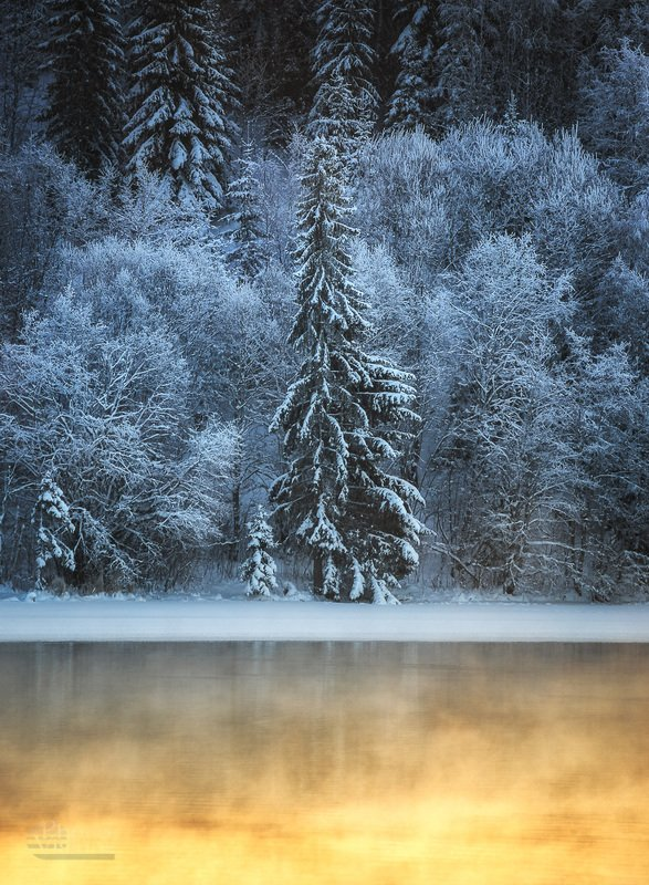 tree.forest,frozen.fog,steam,snow,norway,wintertime,winter The Treephoto preview