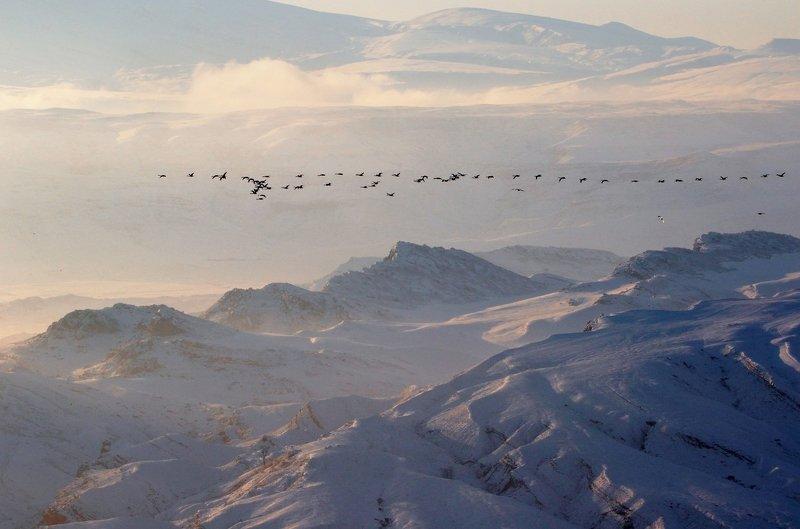 ицы,перелёт,зима,горы,вечер,снег,пейзаж,природа,дагестан.. Запоздалый клин...photo preview