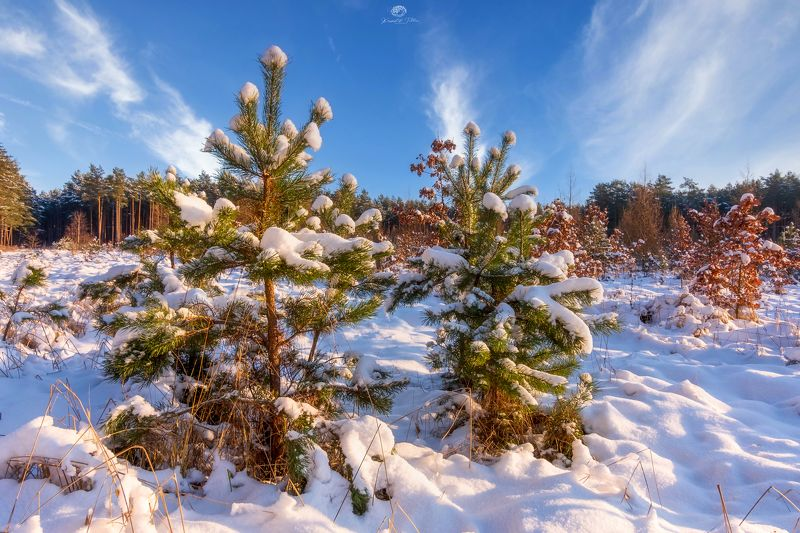 winter 2021, nature, landscape, snow, frost, forest, trees, light, sky, clouds Winter morningphoto preview