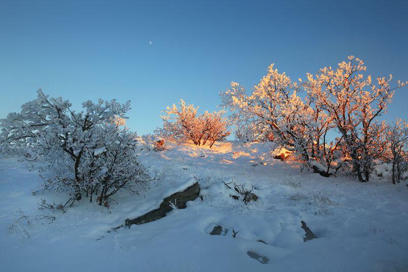 зима,вечер,горы,вершины,пейзаж,небо,деревья,дагестан,природа Вечерние зарисовки..photo preview