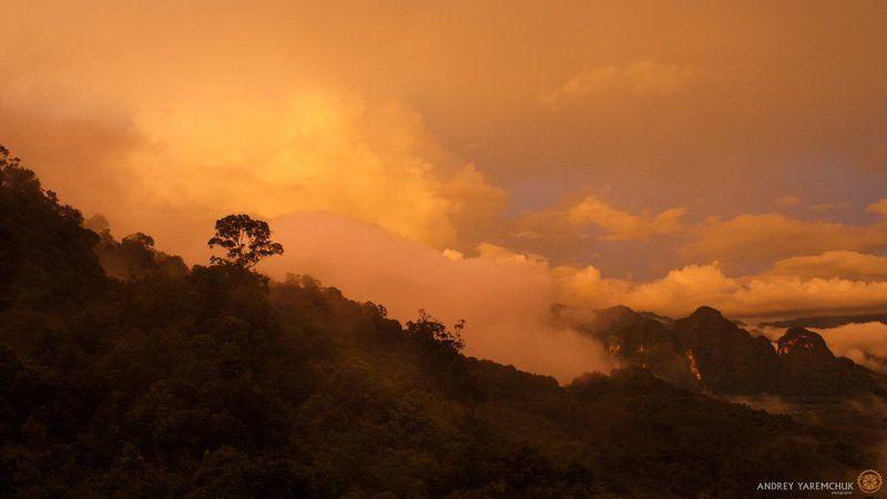 rain forestphoto preview