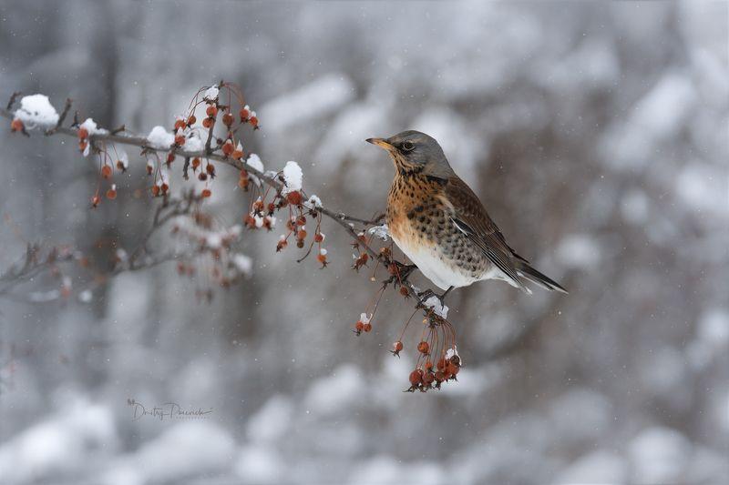 природа, лес, поля, огороды, животные, птицы, макро Роскошный завтракphoto preview