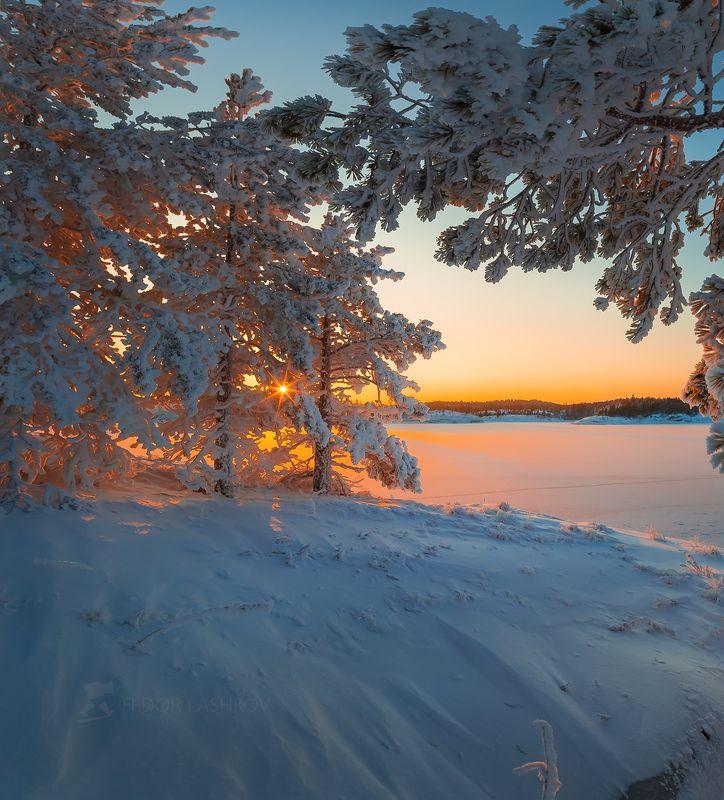 ладожское озеро, карелия, зима, снег, солнце, закат, лёд, сосна, наледь, деревце, зимнее, иней, шхеры, остров, Морозный закатphoto preview