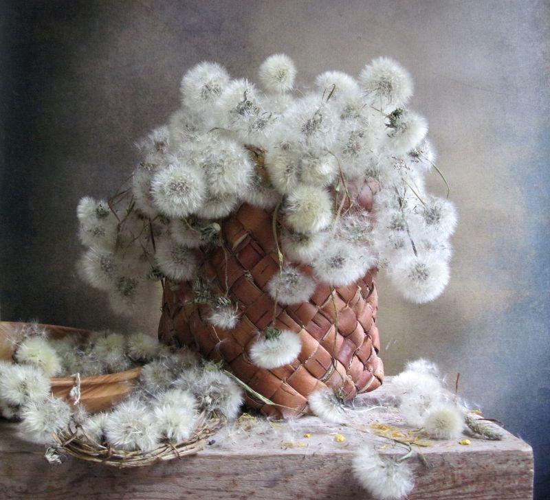 цветы, букет, одуванчики, венок, туес, винтаж Пушистикиphoto preview