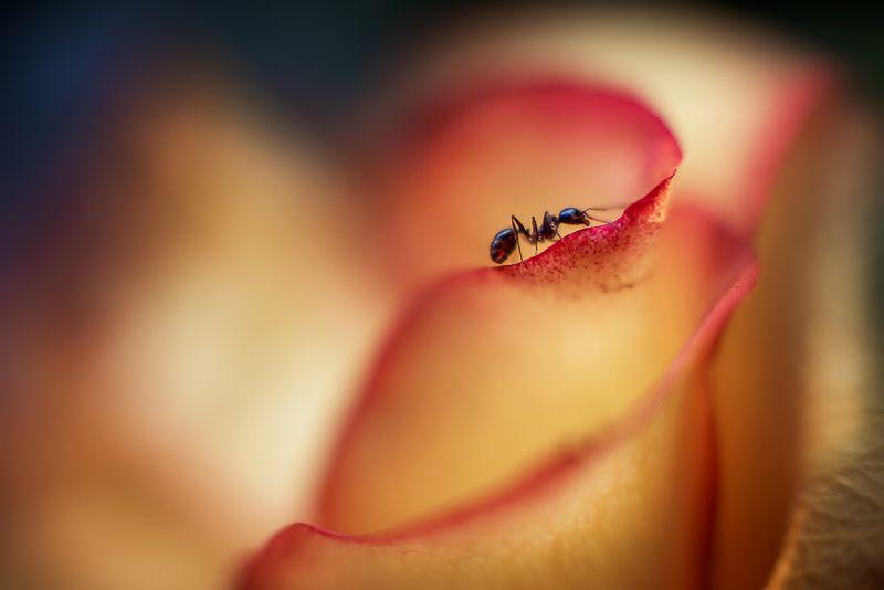 муравей макро цветок Дружба муравья и цветкаphoto preview
