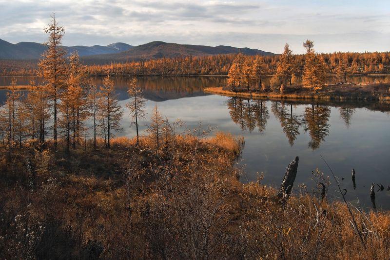 В краю озёр и рыжих лиственницphoto preview