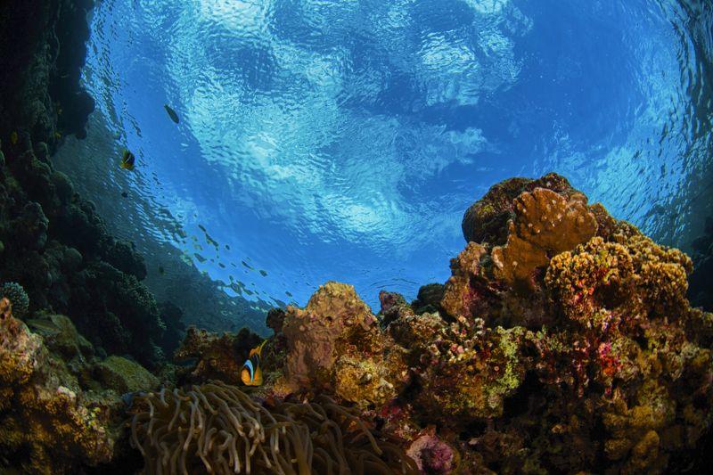 широкий угол, подводный мир, блю холл, дахаб, голубая дыра  Блю Холл photo preview