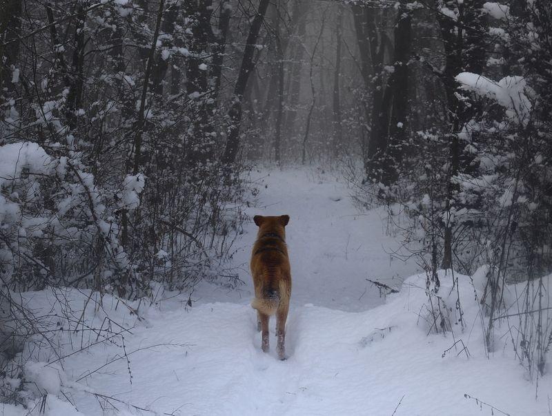 зима туман лес утро собака Дорога в зимний лесphoto preview