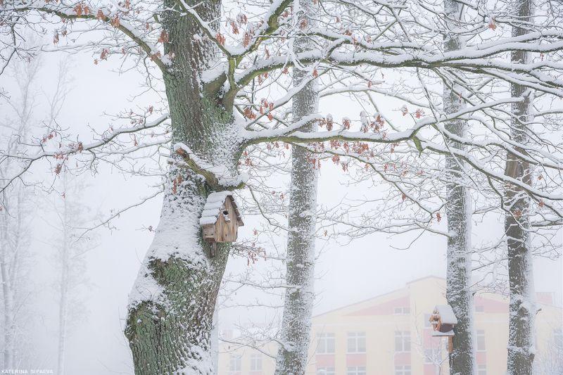 природа, зима, лес, пейзаж Дуб примерил зимние одеждыphoto preview