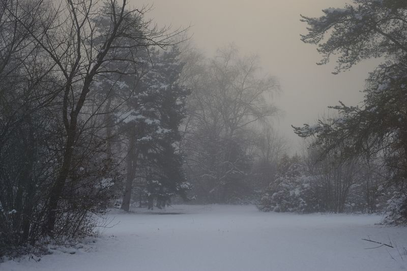 зима туман лес утро Зимний рассветphoto preview