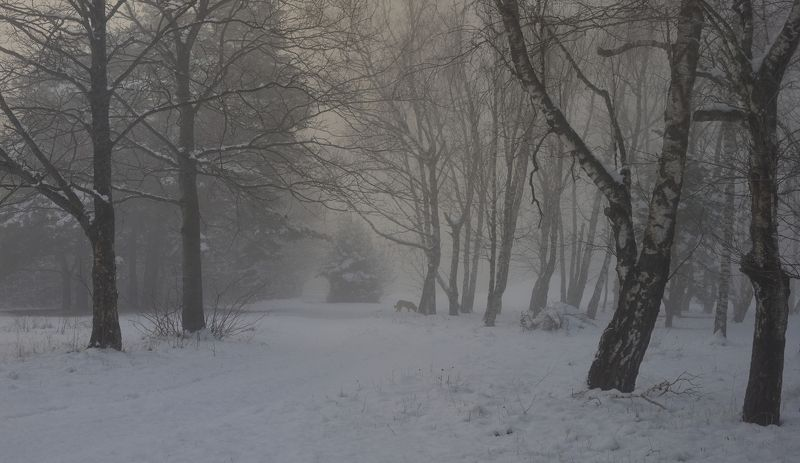 зима туман лес утро Вставало зимнее солнцеphoto preview