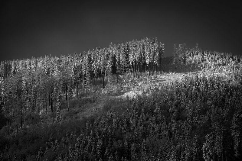 nature, landscape, beskidy, snow, winter, morning Winter wonderlandphoto preview