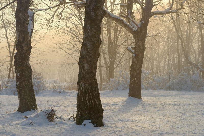 зима туман лес утро солнце Зимнее утроphoto preview