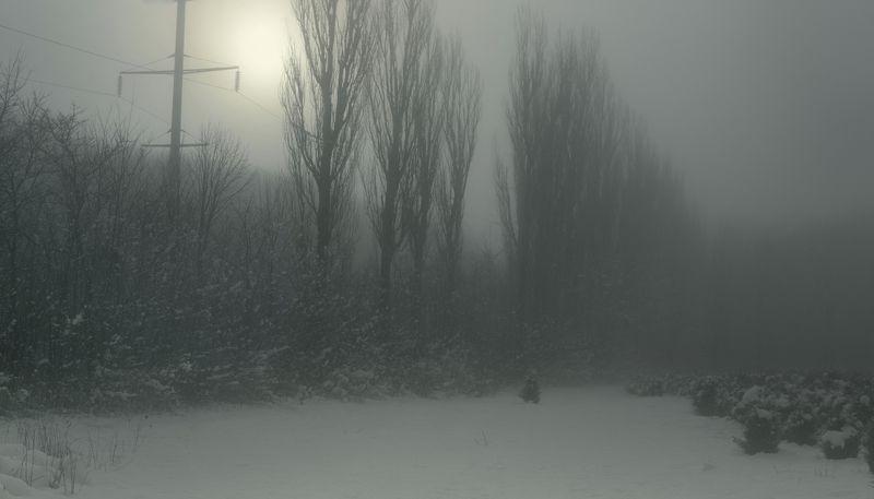 зима туман лес утро Туманное утроphoto preview