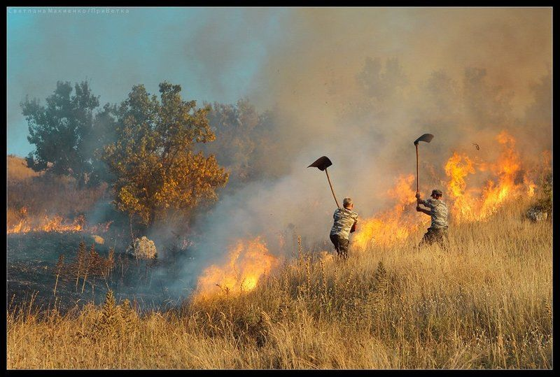 О степных пожарныхphoto preview