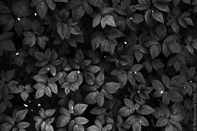 Листьяphoto preview