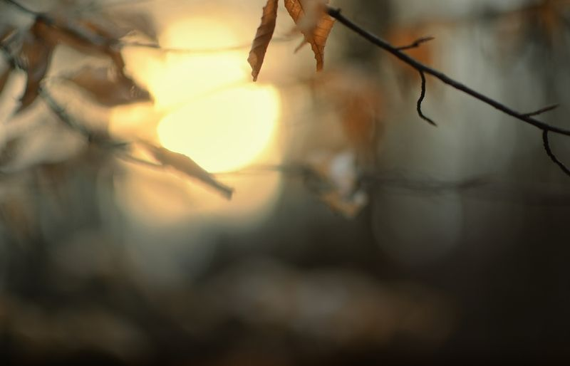 рассвет солнце лес Восход солнцаphoto preview