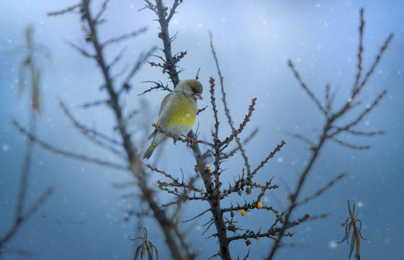 природа, лес, поля, огороды, животные, птицы, макро Последние ягодкиphoto preview