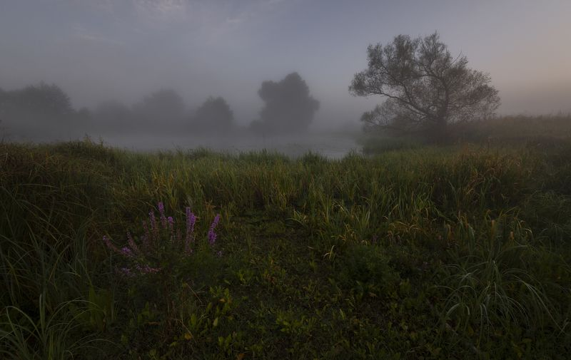foggy dawn...photo preview