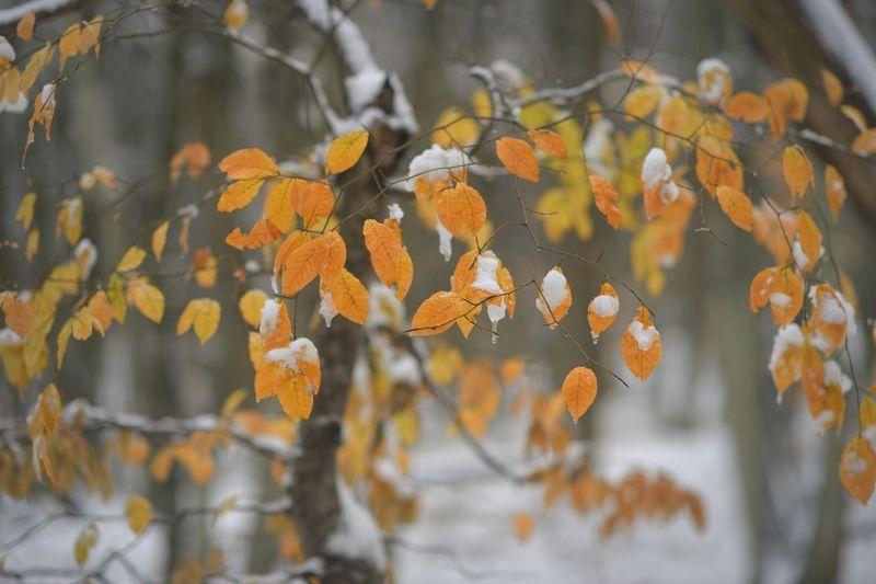 осень листва утро лес снег Ушедшая осеньphoto preview