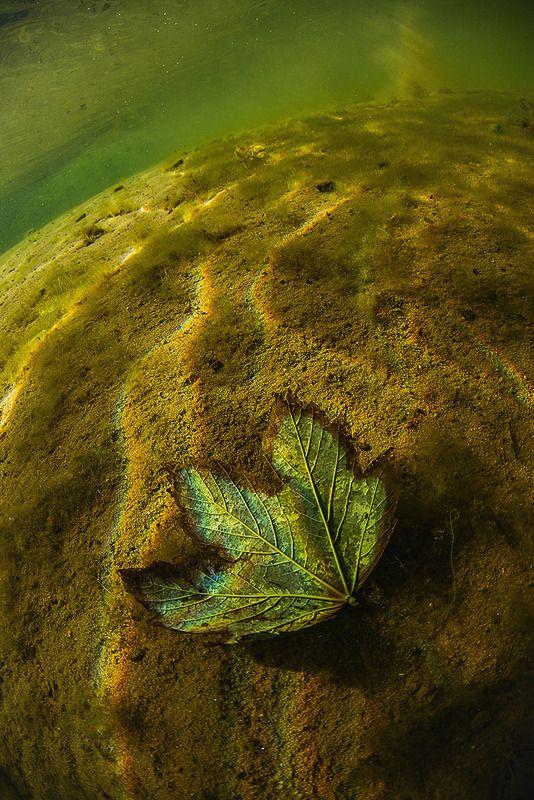 арт, подводный мир, калининград, широкий угол Подводный Артphoto preview