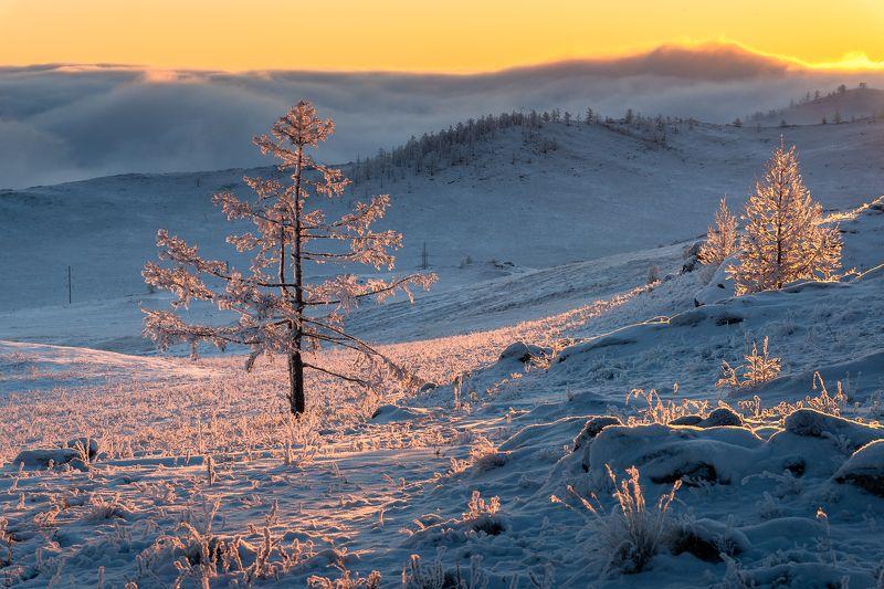 зима, снег,  рассвет, туман, тажеранская степь Там за туманами ...photo preview