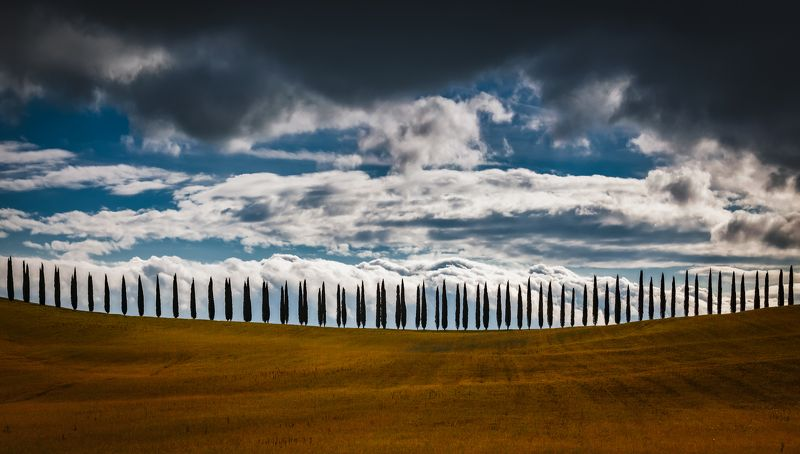 кипарисы, поле hedgephoto preview