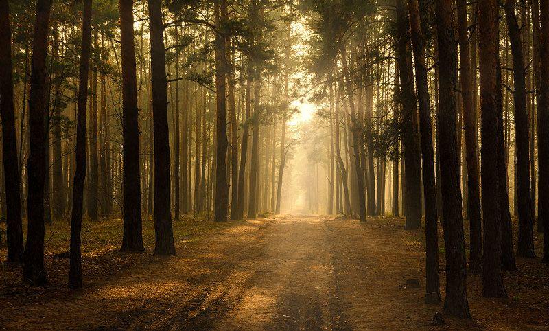 landscape, пейзаж, утро, лес,  деревья, солнечный свет,  солнце, природа,  прогулка, золотое утроphoto preview