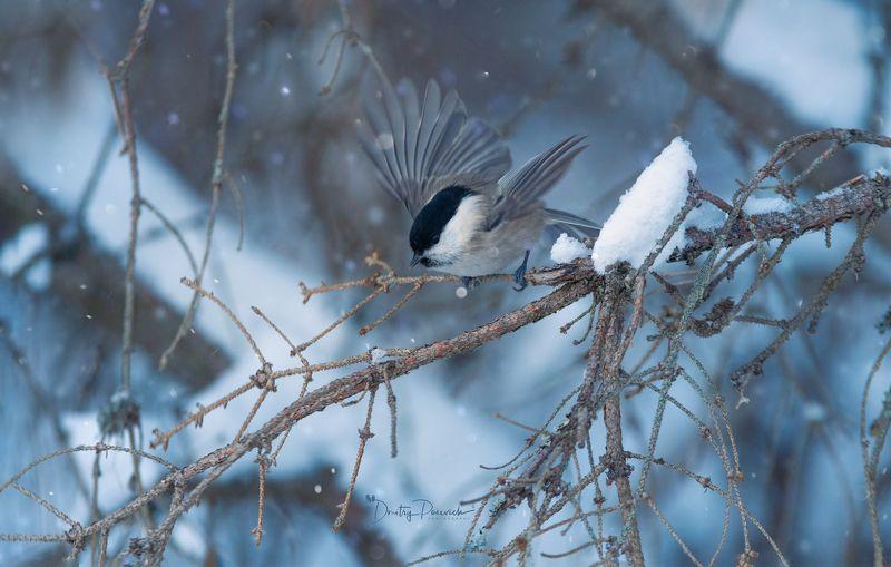 природа, лес, поля, огороды, животные, птицы, макро Пушистое настроениеphoto preview