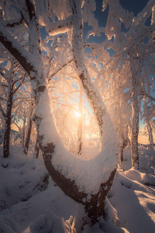 Sunrise, landscape, winter, snow, sun, light, nature, czech republic, tree, trees, forest The Tree of lightphoto preview