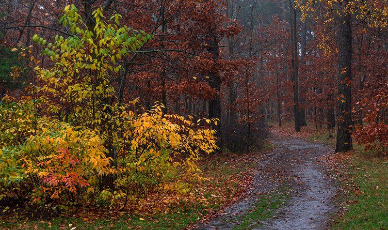 landscape, пейзаж,  лес,  деревья,  природа,   осень, осенние краски осенние дорогиphoto preview