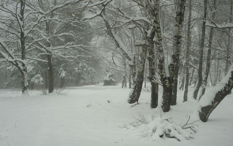 зима лес утро снег Зимаphoto preview