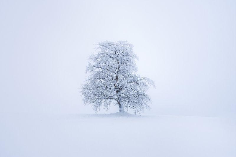 Sunrise, landscape, winter, snow, sun, light, nature, czech republic, fog, tree, mist Alone in the fogphoto preview