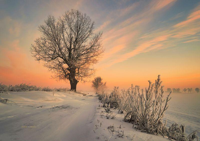 Tree, landscape, sunrise, fog, nature, winter Treephoto preview