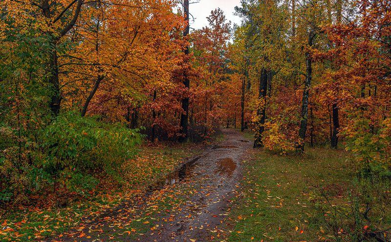 landscape, пейзаж,  лес,  деревья,  природа,  осень, осенние краски, лужа, дождь дождливая осеньphoto preview