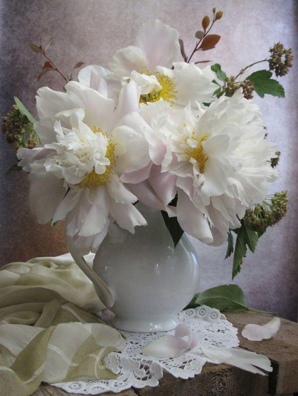 цветы, букет, пионы Пионыphoto preview