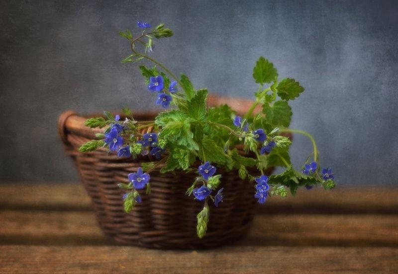 натюрморт,цветы,лето,вероника летние воспоминания...photo preview